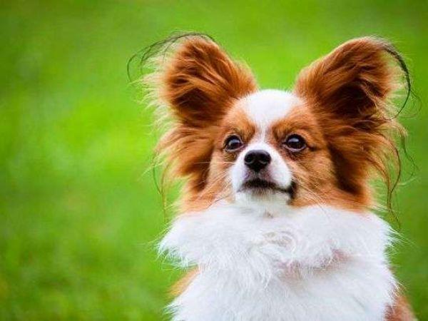 Могут ли передаваться глисты от собаки к человеку, как ими можно заразиться