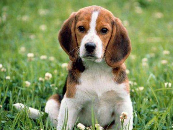 Как правильно глистогонить собаку перед прививкой и зачем