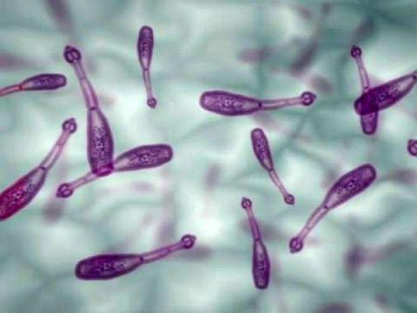 Что такое эхинококковая киста, пути заражения и симптомы