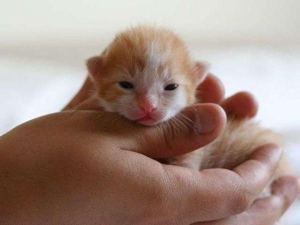 Какие бывают разновидности глистов у кошек