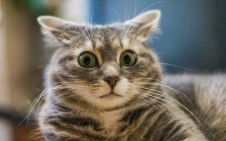Как понять, что у кошек и котов глисты