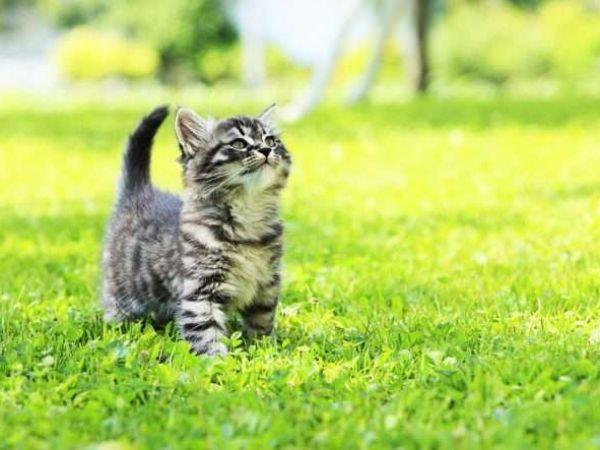 Обзор эффективных таблеток от глистов для котят