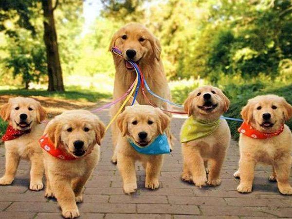 Лучшие глистогонные препараты и средства для собак