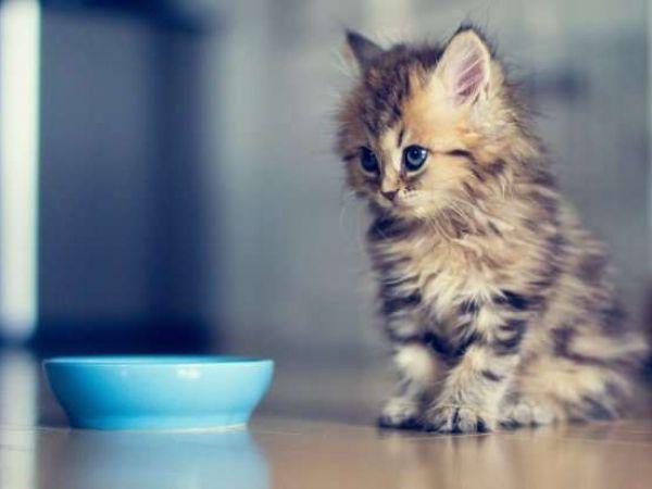 Эффективные капли на холку для кошек от глистов