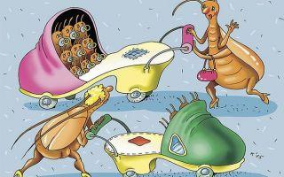 Животные паразиты: примеры, список