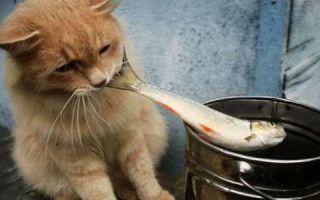 Жизненный цикл кошачьей двуустки, ее симптомы и лечение