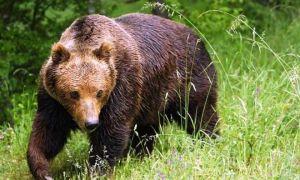 Как защищают себя от паразитов дикие животные