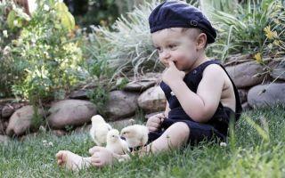 Как попадают яйца глистов в окружающую среду и организм человека?