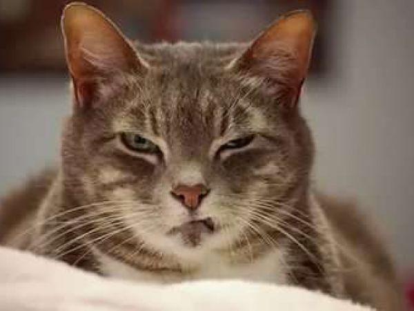Симптомы глистов у животных, таблетки и препараты для лечения