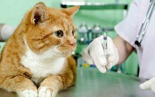 Проверяем кошку на заражение токсоплазмозом с помощью анализа крови