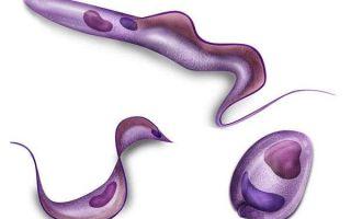 неумывакин очищение организма от паразитов