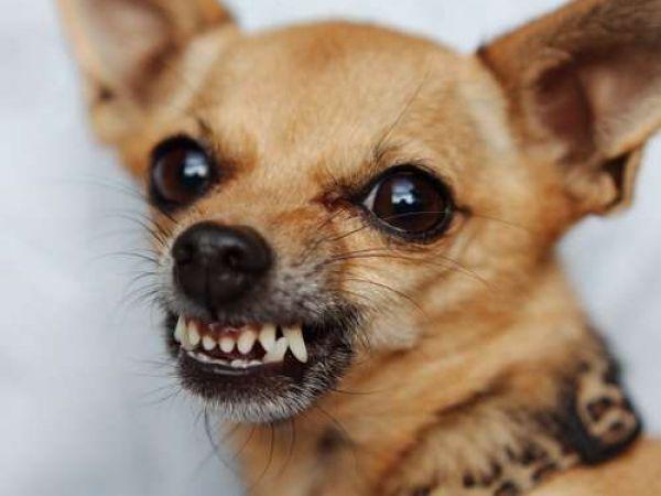 Как правильно давать собаке таблетки от глистов и какие