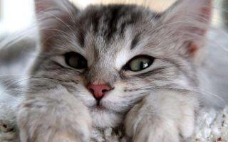 Лучшие лекарственные средства и препараты от глистов для котят