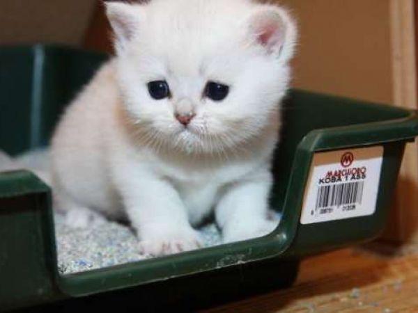 Симптомы и лечение глистов (гельминтов) у кошек