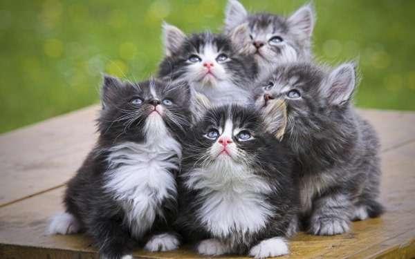 кошки лечение глист