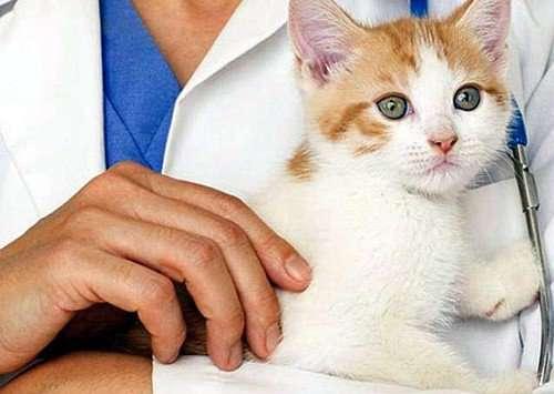 врач и кошка