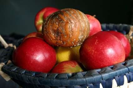 на фруктах миаз