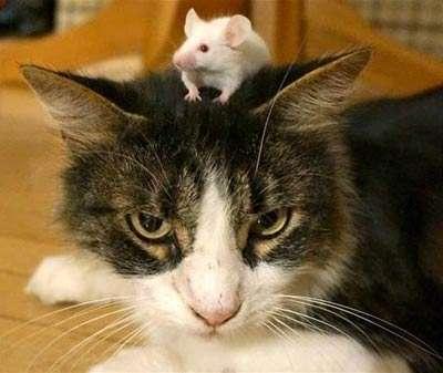 кот с мышей