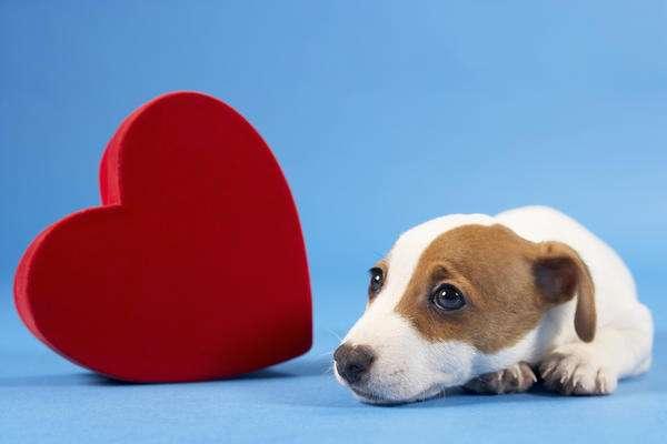 лечим собак