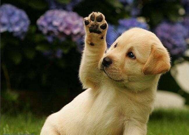щенок и прививка