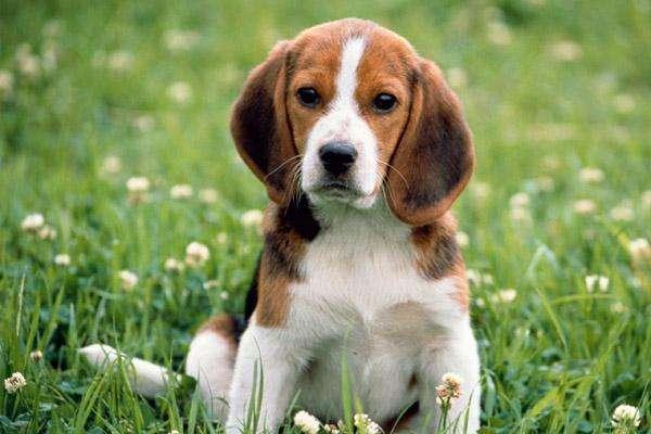 собака и прививка
