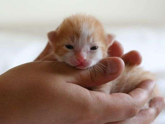 котенок глисты