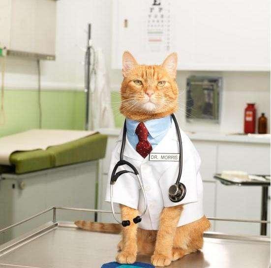 доктор-кот