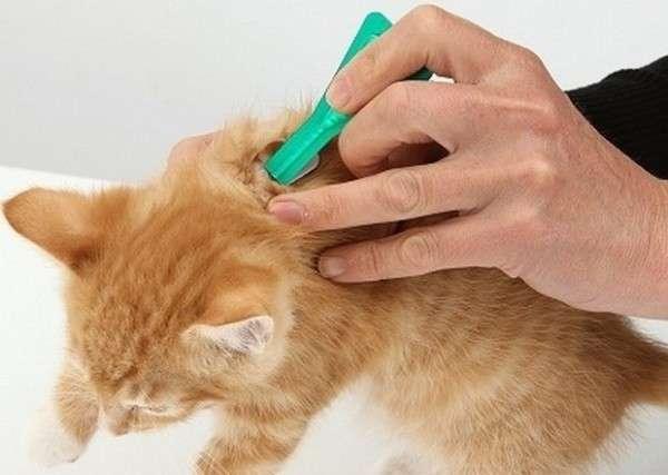 лечим кота