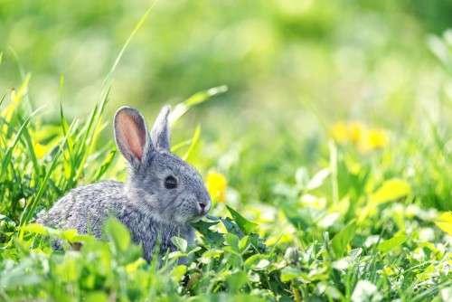 кролик на травке