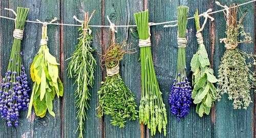 Трава от глистов для человека