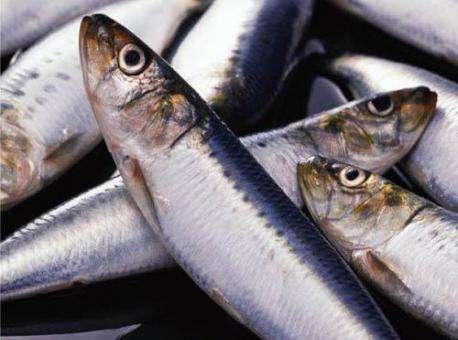 рыбные паразиты опасные для человека