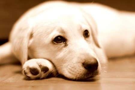 симптомы у собаки