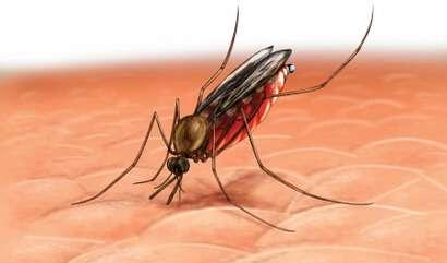 малярия болезнь