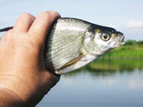 рыба на озере