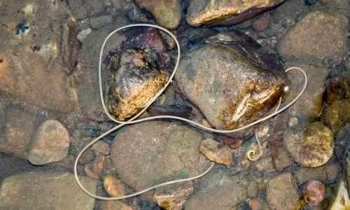 паразит под кожей человека фото