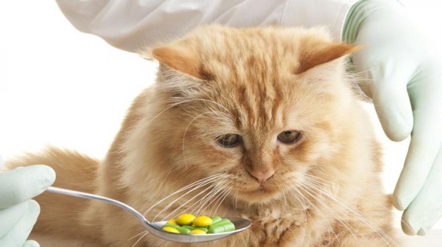 таблетки кошкам