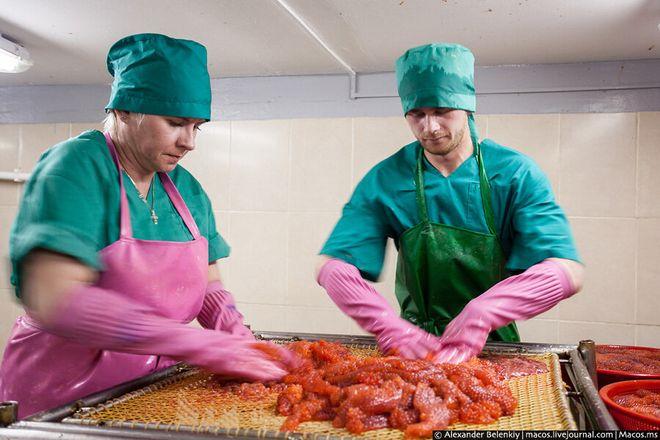 Приготовление красной икры на производстве