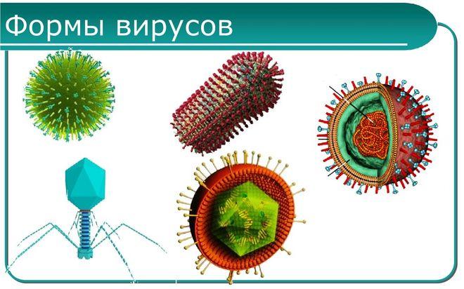 Разновидности вирусов