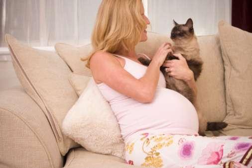 беременная с котом