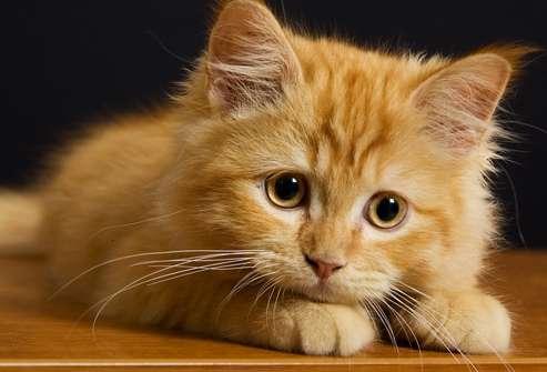 таблетки коту