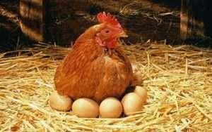 яйца паразиты