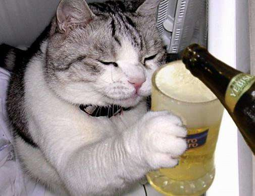 алко кот