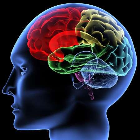 аскариды в головном мозге