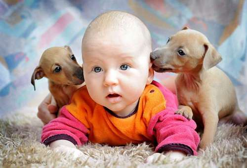 ребенок и собаки