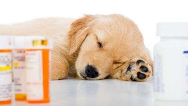 таблетки животным