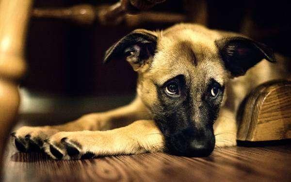 собака заражение
