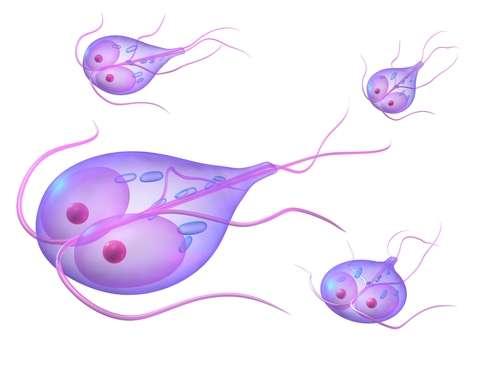 лямблии паразиты