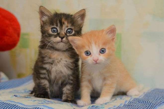два котенка с глистами