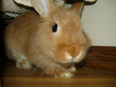 симптомы глистов у кролика
