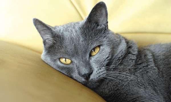 уколы котенку